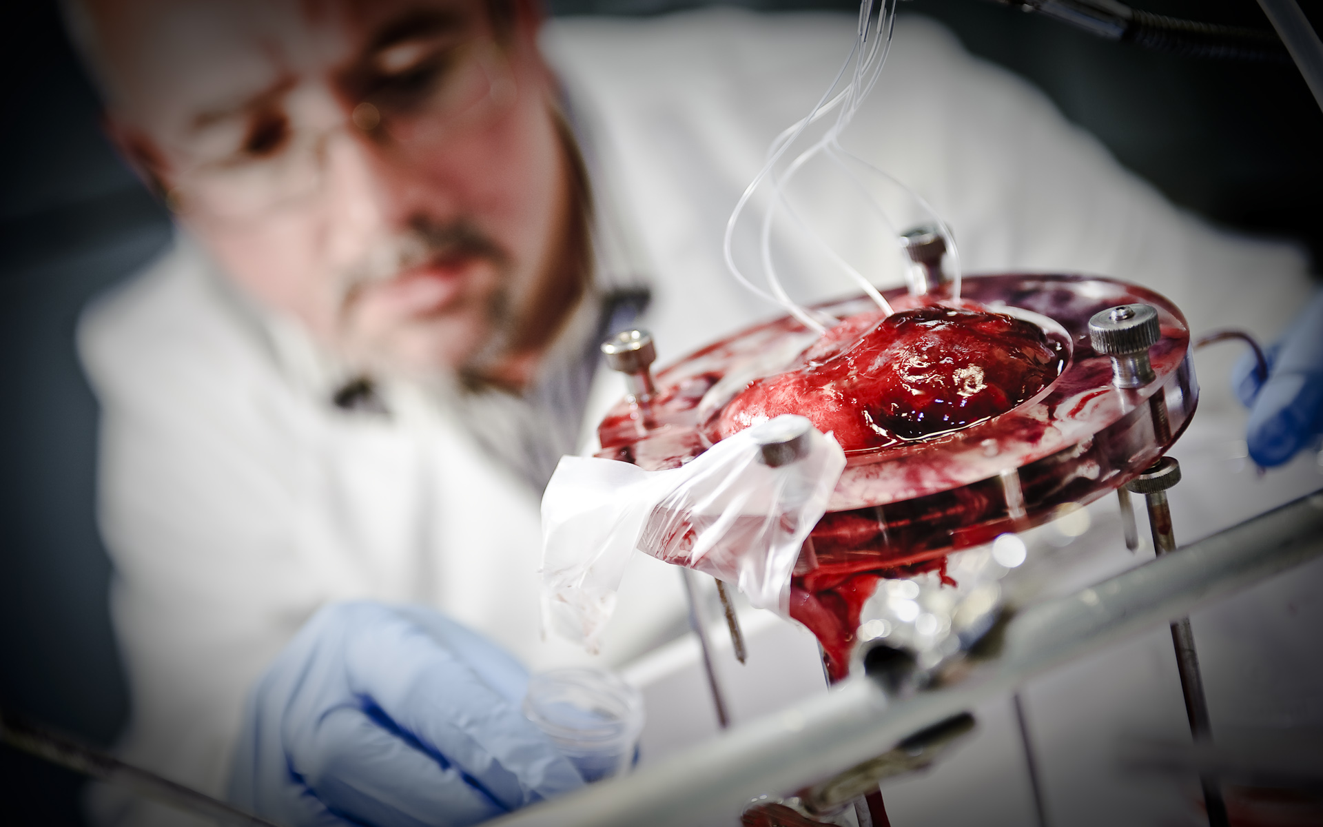scientist perfusing a human placenta